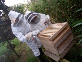 Beekeepers at work on their hives in Killinchy.