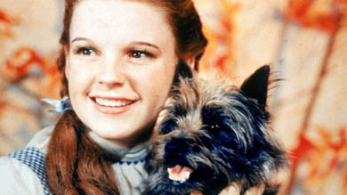 The search is on for a dog suitable for Dorothy to handle in the production of the Wizard of Oz in Downpatrick.