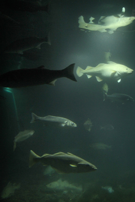 The underwater world of Portaferry's Exploris aquarium may soon be a feature of the past.