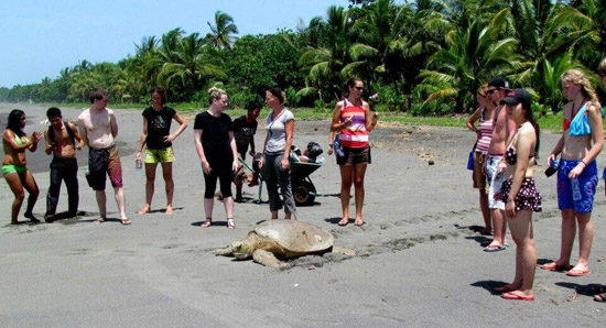 Sean with his helpers ensure that when a turtle pays its eggs that they are protected from harm.