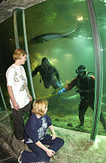 Divers clean the glass in the Exploris tanks.