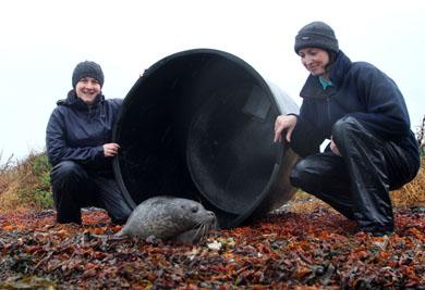 Aquarists release Puck into Strangford Lough.