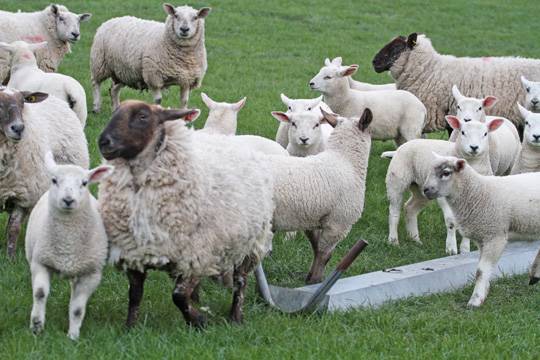 DARD Minister Michelle O'Neill is trying to find a solution to the issues of sheep