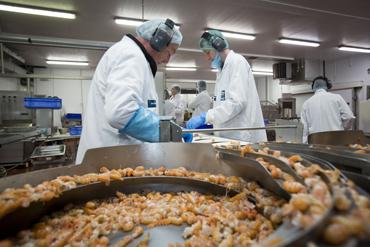 Scampi processing at KIlkeel Seafoods.
