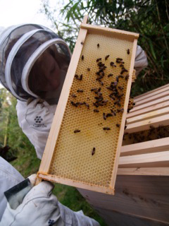 Hives are inspected at the start of the new season.