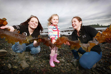 Lucy Roddy aged 3, (centre), spends some time on the shore in Portaferry learning about the different types of seaweed from Emma Gorman, (left), a member of the EnAlgae team and Dr Karen Mooney, Project Manager with EnAlgae, a programme within Queens University Marine Laboratory