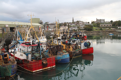 The fishing sector in Northern Ireland will be hard pressed in 2014 as a result of quota cuts.