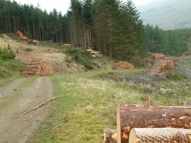 DARD has launched a Forestry Scheme