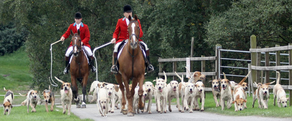 The East Down Foxhounds parade at the Downpatrick races.