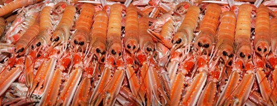The cut in prawn quota could be the start of a long slippery slope for the Northern Ireland fishing industry.