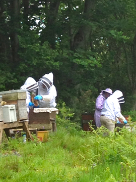 The Killyleagh & District Bee Keepers Association takes place on Wednesday 30 September at 7.30pm in the Andrews Primary School in Comber.